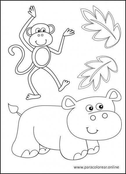 Animales-de-la-selva-para-colorear-13