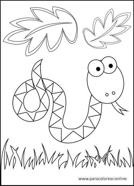 Animales-de-la-selva-para-colorear-9